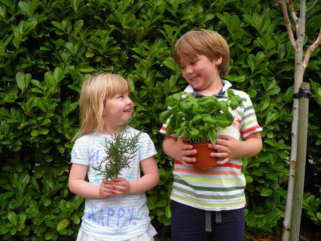 Creche Herb Garden - Park Academy Childcare