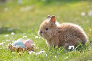 Killruddery Easter Event
